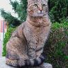 Diabetes bei Katzen lässt sich gut behandeln