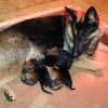 Hunde-Mama mit drei Babys nachts vor Tierheim ausgesetzt