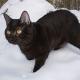 Rache eines Vogelfreundes: Nachbars Katze mit Wasserschlauch tot gespritzt