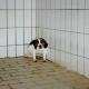 Wissenschaftliche Studien bezweifeln die Aussagekraft von Tierversuchen