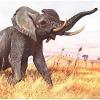 Tragischer Zoo-Unfall: Elefantenbulle tötet Trainerin