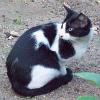 Grausamer Katzen-Hasser hackt Katzen die Schwänze ab