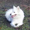 Unfassbar: Hundebesitzer wirft 5 neugeborene Welpen aus Dachfenster