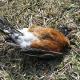 Mehr als 1000 Vögel tot vom Himmel gefallen