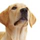 Neues Krebs-Präparat für Hunde auf dem Markt