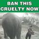 Video schockt England: Elefantendame (58) Opfer brutaler Tierquäler in Zirkus