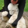 Eisbär Knut unerwartet gestorben