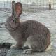 Schüler durften Kaninchen noch streicheln, dann wurde es geschlachtet