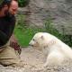 Nach Obduktion: Rätsel um Knuts Tod ist gelöst