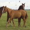 Ratgeber zur Entgiftung von Pferden