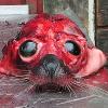 Der Horror der Robbenjagd: Aufgeschlitzt und gehäutet bei lebendigem Leib