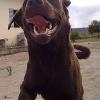 Hundeattacken: Hundehaltern fehlt oft jegliches Problembewusstsein