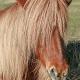 Unfassbar: Pony von Tierhasser auf Weide angezündet!