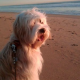 Hundeführschein, Beißattacken, Kampfhunde & Co