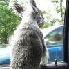 Reiseübelkeit beim Hund