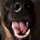 Hundeaktivisten: Nebeneinander statt Miteinander?