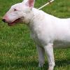 Ab sofort Pflicht: Weiterhin harsche Kritik am Wiener Hundeführschein
