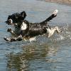 Hitzetod in Wien: 3 Hunde starben qualvoll in PKW