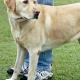 Versicherung empfiehlt Hundehalterin Tötung: