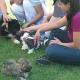 Große Ferienaktion rund um den Hund in Wien