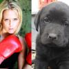 Wieder feiger Giftköderanschlag: Labrador-Welpe der österreichischen Kickboxweltmeisterin vergiftet