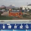 Dock Diving am 1. Wiener Hundetag - Veranstaltung gegen Hundefeindlichkeit