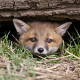 Tierschutz-Aktionstag im Tiergarten Schönbrunn im Zeichen des