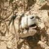 Hund angeschossen, gefesselt und lebendig begraben