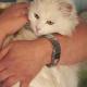 Feiertag für Samtpfoten: So fühlt sich Ihre Katze wohl