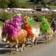Almabtrieb: Heimmarsch der Sennerinnen und Senner mit ihren Kühen