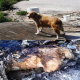 Gebärende Hundemutter bei lebendigem Leib verbrannt