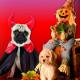 Halloween-Stress für Heimtiere verhindern