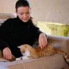 Tierische Untermieter: Hund, Katze & Co im Mietrecht