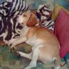 Betreuung mit Niveau: Hundezentrum Wien