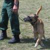 Jäger zeigt im TV illegale Elektroschockgeräte für Jagdhunde - Tierschutz erstattet Anzeige
