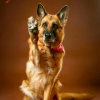 Hunde werden zu Tierfutter verarbeitet: Selbst Haustiere werden weiterhin gnadenlos getötet