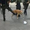 Louk, der Athener Streik-Hund