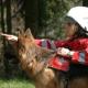 Bundesverband Rettungshunde sagt Teilnahme an Rettungshunde WM in Ukraine ab