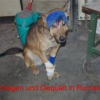 Barbarei in der EU: Rumänien verabschiedet Gesetz zur Euthanasie