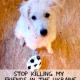 Fußball EM 2012 auf blutigem Rasen - Hundemassaker in der Ukraine
