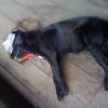 Das Töten der Straßentiere in der Ukraine geht weiter