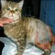 Nicht nur Hunde leiden in der Tierhölle Ukraine: Kleines Kätzchen halb verbrannt und mit Stock vergewaltigt