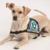 Taxilenker müssen Blindenführhunde befördern: Beförderungspflicht tritt mit Beginn des kommenden Jahres in Kraft