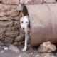 Fußball nicht um jeden Preis: Almo Nature engagiert sich großzügig für die ukrainischen Straßenhunde