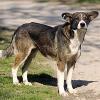Tierschutz-Etappensieg in Rumänien: Verfassungsgericht verbietet Hundetötungen