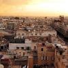 Hilfe für tierische Kriegsopfer in Libyen