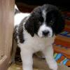 Die Problematik der Hundesteuerabgabe - ein Wiener Problem?