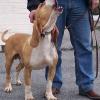 Trotz nachgewiesener Verstöße: Tierschützer auf Kreditschädigung verklagt - Hundetrainer wegen Verjährung straffrei
