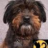 perro negro - Geschenke für Mensch und Hund