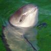 Großes Herz für kleine Wale